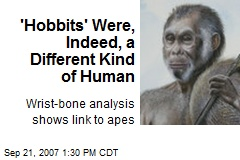 'Hobbits' Were, Indeed, a Different Kind of Human