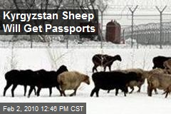 Kyrgyzstan Sheep Will Get Passports