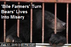 'Bile Farmers' Turn Bears' Lives Into Misery