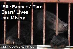 'Bile Farmers' Turn Bears' Lives Into Misery