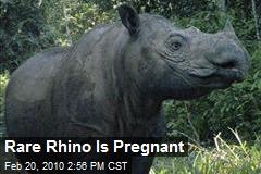 Rare Rhino Is Pregnant