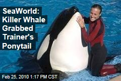 SeaWorld: Killer Whale Grabbed Trainer's Ponytail