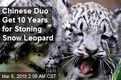 Chinese Duo Get 10 Years for Stoning Snow Leopard