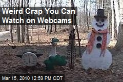 Weird Crap You Can Watch on Webcams