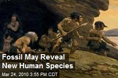 Fossil May Reveal New Human Species