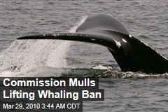 Commission Mulls Lifting Whaling Ban