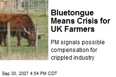 Bluetongue Means Crisis for UK Farmers