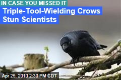 Triple-Tool Crows Stun Scientists