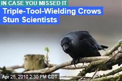 Triple-Tool Crows Stun Scientists