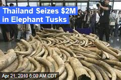Thailand Seizes $2M in Elephant Tusks