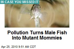 Pollution Turns Male Fish Into Mutant Mommies