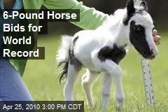 Mini Horse In Barnstead Could Claim World Record - New Hampshire News Story - WMUR Manchester