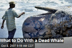 What to Do With a Dead Whale