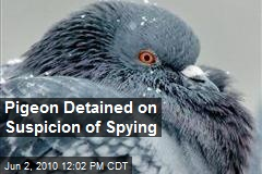 Pigeon Detained on Suspicion of Spying
