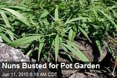 Pot Plantation Found in Convent Garden