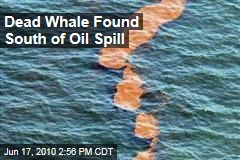 Dead Whale Found South of Oil Spill