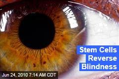 Stem Cells Reverse Blindness