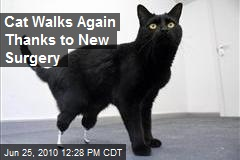 Cat Walks Again Thanks to New Surgery