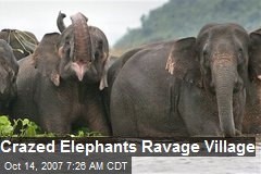 Crazed Elephants Ravage Village
