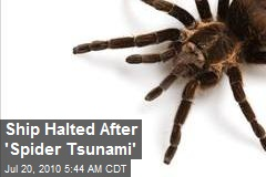 Ship Halted After 'Spider Tsunami'