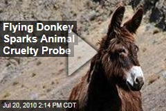 Flying Donkey Sparks Animal Cruelty Probe