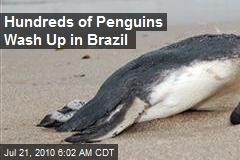 Hundreds of Penguins Wash Up in Brazil