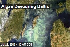 Algae Devouring Baltic