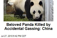 Beloved Panda Killed by Accidental Gassing: China