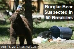 Burglar Bear Suspected in 50 Break-Ins