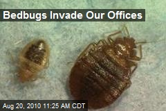 Bedbugs Invade Our Offices