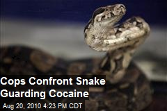Snake Guarding Cocaine Found by Police