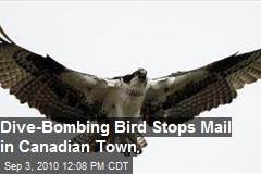 Dive Bombing Bird Stops Mail