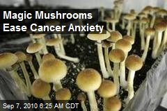 Magic Mushrooms Ease Cancer Anxiety